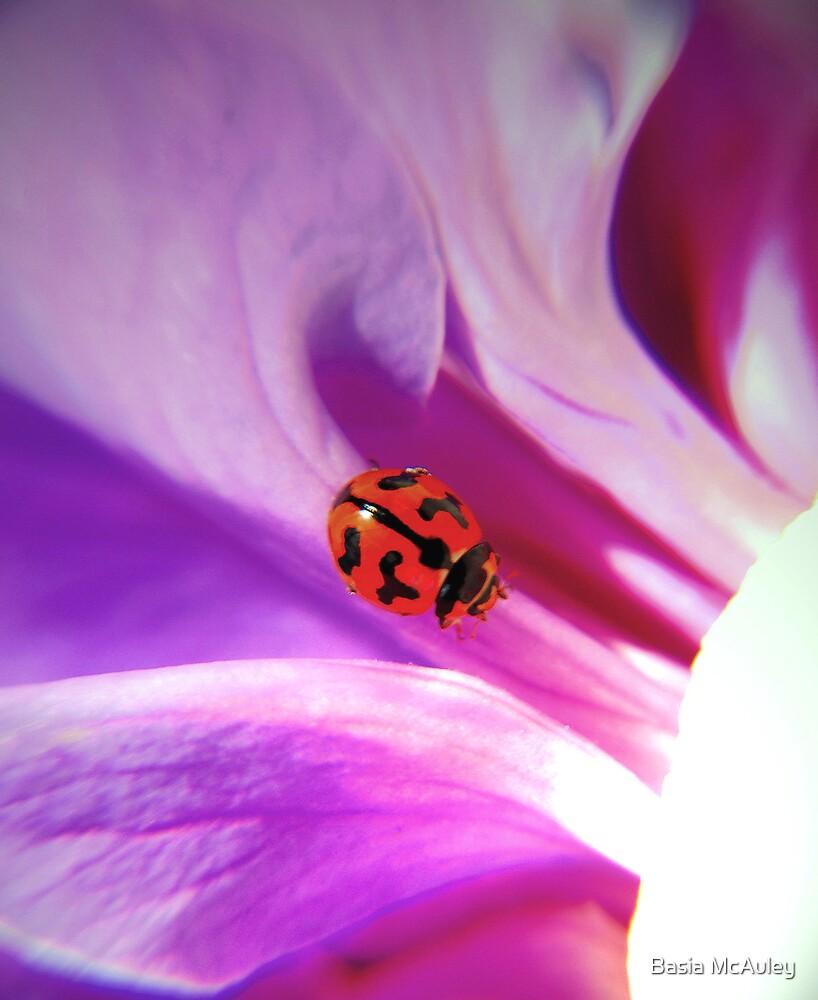 My ladybird by Basia McAuley
