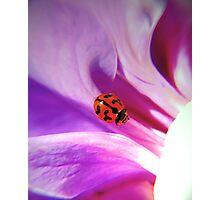 My ladybird Photographic Print