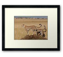 Cheetah Tails Framed Print