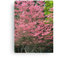 dogwood spring Canvas Print
