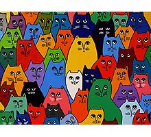 Cat Pack 2 Photographic Print