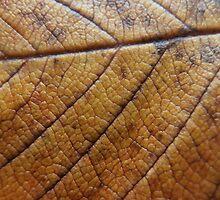 Fallen Leaf by Sarah Schwartz