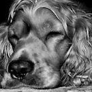 Sleepy,,,sleepy by Sorin  Reck