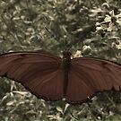 Taking flight by Moninne Hardie