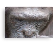 Chimp Brow Canvas Print