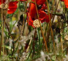 Summer Poppies Sticker
