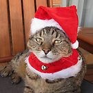 Christmas Tabby by Sally Ford