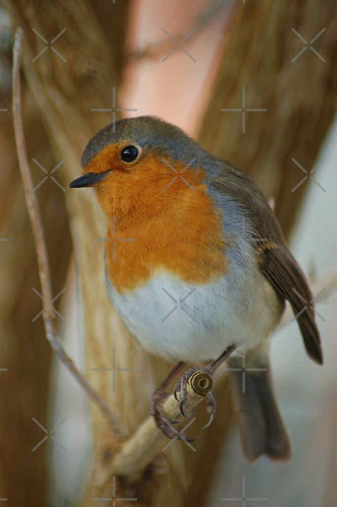 Robin Redbreast by ApeArt