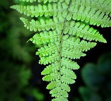 Frond by Robert Meyer