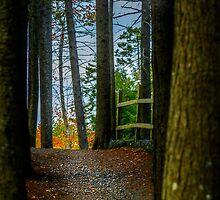Hemlock Ravine Park by kenmo
