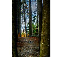 Hemlock Ravine Park Photographic Print