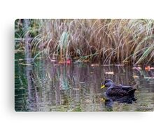 Duck at Heart Shaped Pond Canvas Print