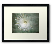 Epiphyllum oxypetallum - Queen Of The Night Cactus Framed Print