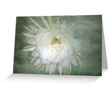 Epiphyllum oxypetallum - Queen Of The Night Cactus Greeting Card