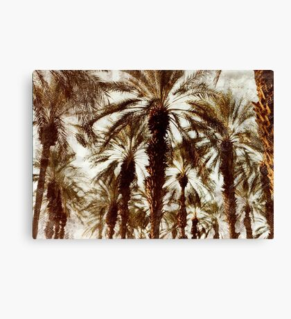 Palm Trees in Grunge Canvas Print