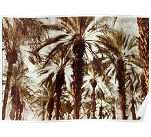 Palm Trees in Grunge Poster