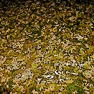 Comic Abstract Field of Yellow Leaves by steelwidow