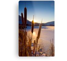Frozen Cattail Sunrise Metal Print