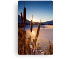 Frozen Cattail Sunrise Canvas Print