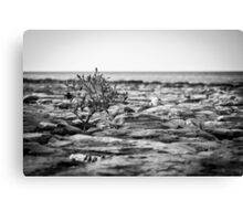 East Point Reflection B&W Canvas Print