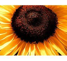 golden rays ... Photographic Print
