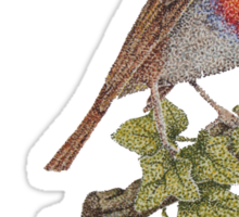 Christmas Robin and ivy leaves illustration Sticker