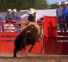 ~ Ride Em Cowboy ~ by WesternDreamer