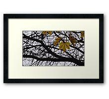 Last Days of Fall. Framed Print