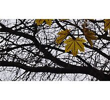Last Days of Fall. Photographic Print