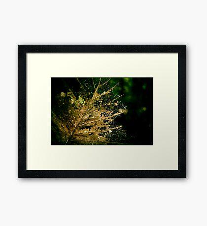 Dried  Framed Print
