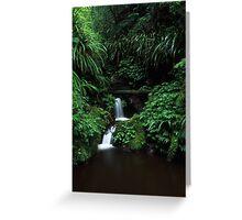 sub-tropical rainforest - Lamington NP, Qld. Greeting Card