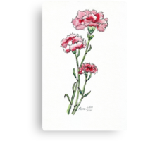 And a Pink Carnation... Canvas Print