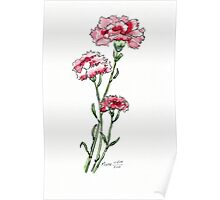 And a Pink Carnation... Poster