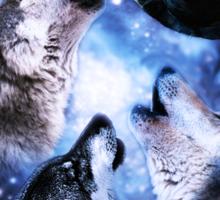 3 Wolf Jon Snow Moon Sticker