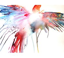 Soaring Parrot Photographic Print