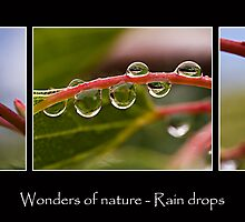 Wonders of Nature - Rain drops by Ben Shaw