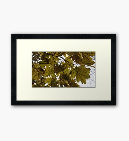 Still Hanging On Framed Print