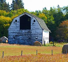 Barn & Bales by Madeline M  Allen