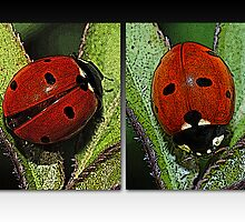 Our Lady's Bugs by Bonnie T.  Barry