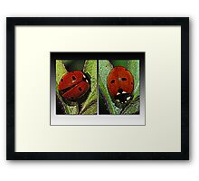 Our Lady's Bugs Framed Print