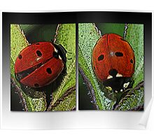Our Lady's Bugs Poster
