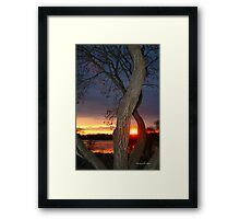 TREE FRAMED SUNSET Framed Print