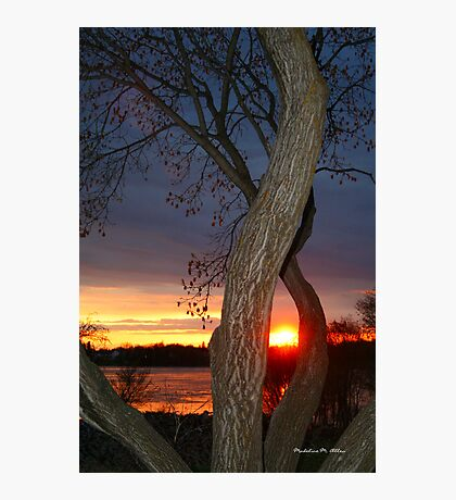 TREE FRAMED SUNSET Photographic Print