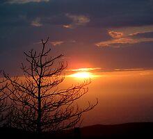 Sunset St Davids by PCDC