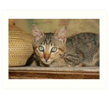 Wicker Kitten Art Print