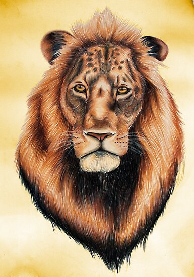 Lion by Penny Edwardes