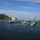 Catalina Island Shoreline by cfam