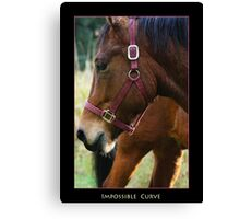 Impossible Curve Canvas Print