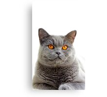 Grey Cat Canvas Print