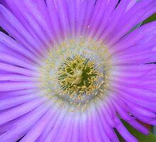 Flower genie. by terryk